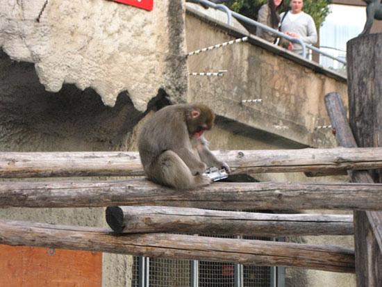 Обезьяна в Московском зоопарке