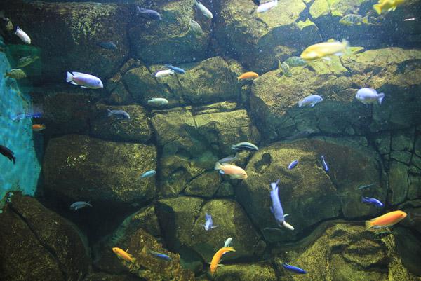Красивые рыбки в океанариуме на Дмитровском оссе