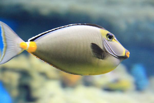 Красивая рыбка в океанариуме на Дмитровском шоссе