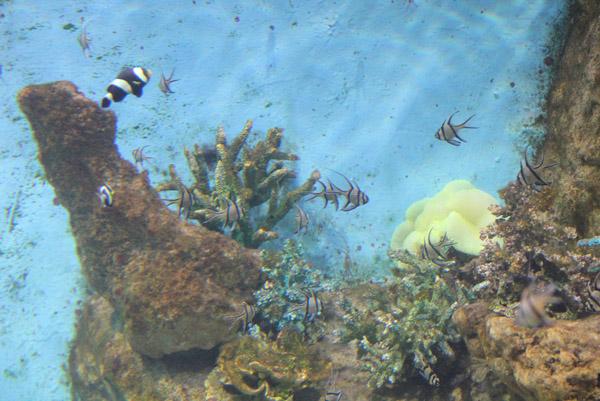 Красивые рыбки в океанариуме на Дмитровском шоссе
