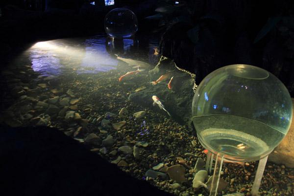 Бассейн с рыбками в океанариуме на Дмитровском шоссе