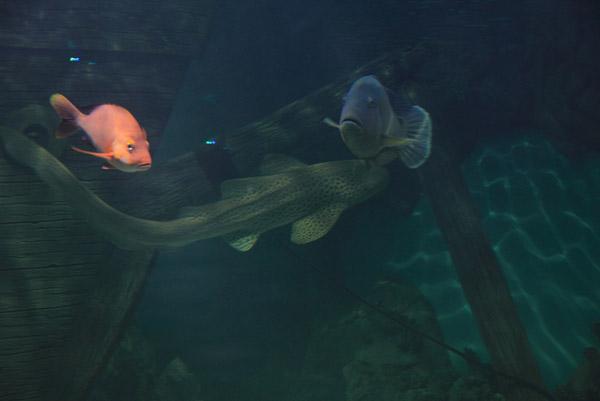 Акула в океанариуме на Дмитровском шоссе
